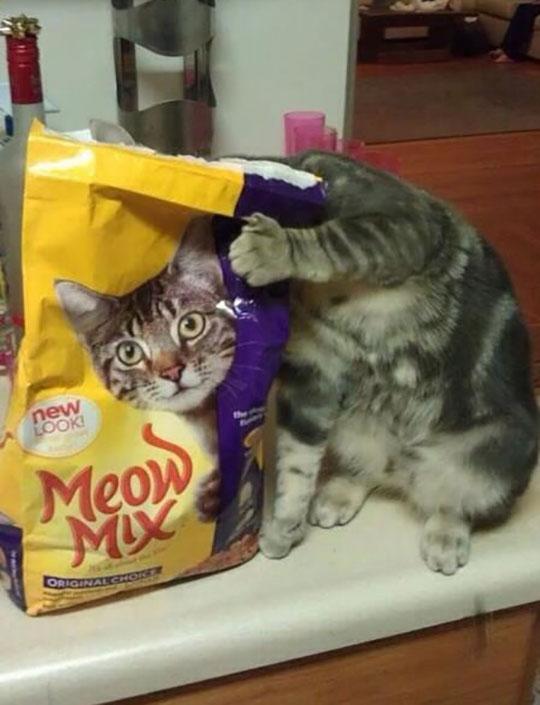 Perfect Timing Cat Pic