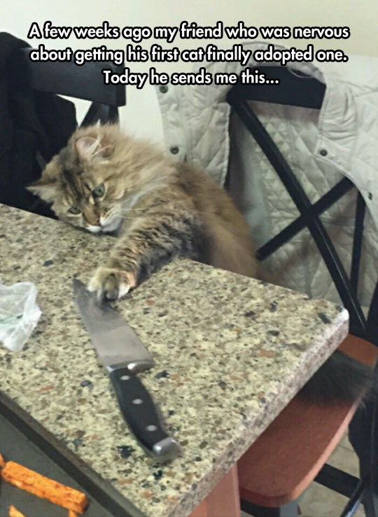 funny-cat-knife-kitchen-playing