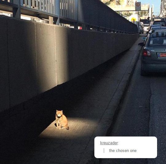 funny-cat-light-highway-spot-sun