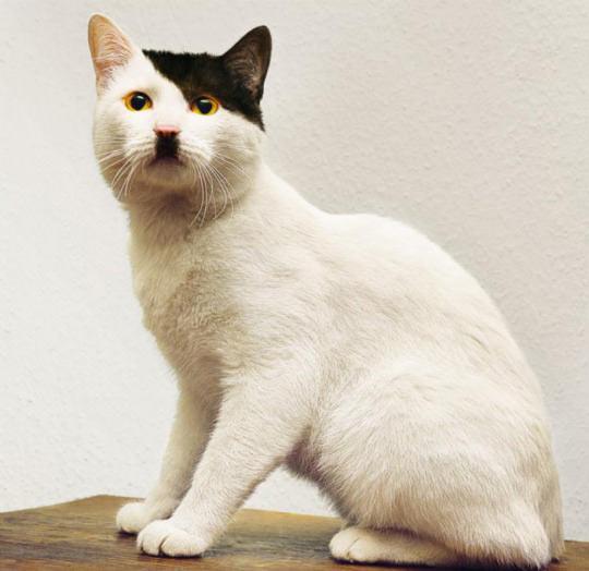 This Cat Looks So Familiar