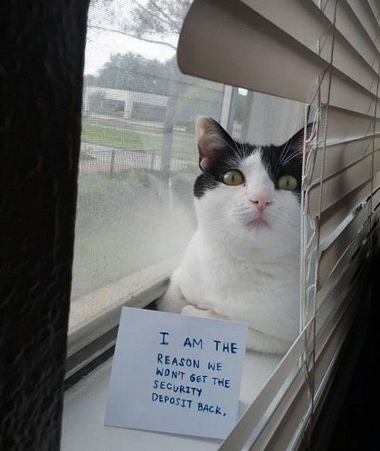 funny-cat-note-reason-window-security-deposit