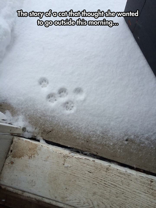 funny-cat-paw-trace-snow-cold
