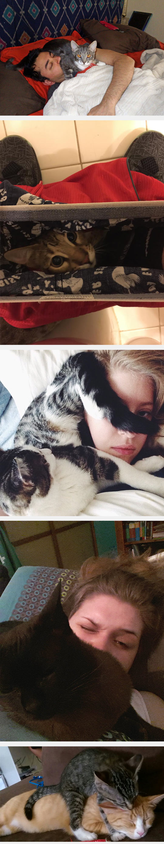 funny-cat-standing-on-owner-face
