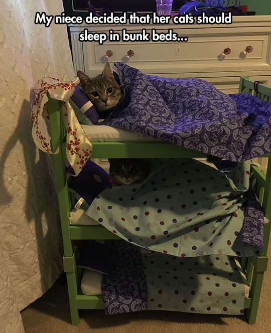 funny-cats-bunk-beds-sleeping