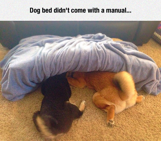 funny-dog-bed-pets-under-wrong-use
