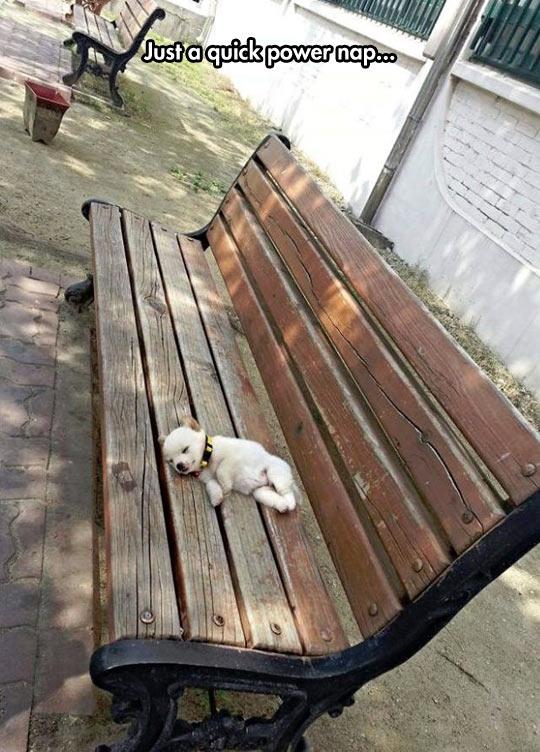 funny-dog-bench-sleeping-nap