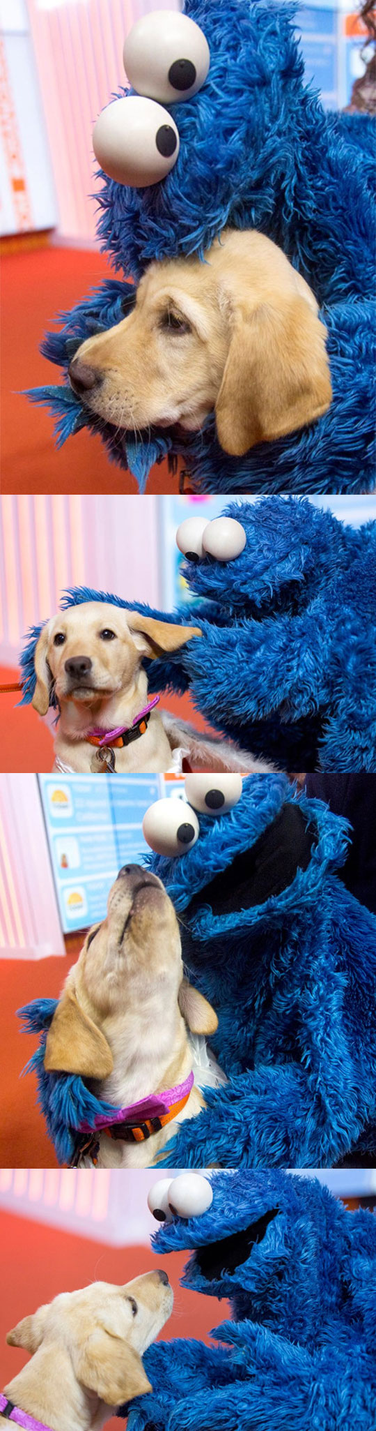 Cute Dog With Cookie Monster