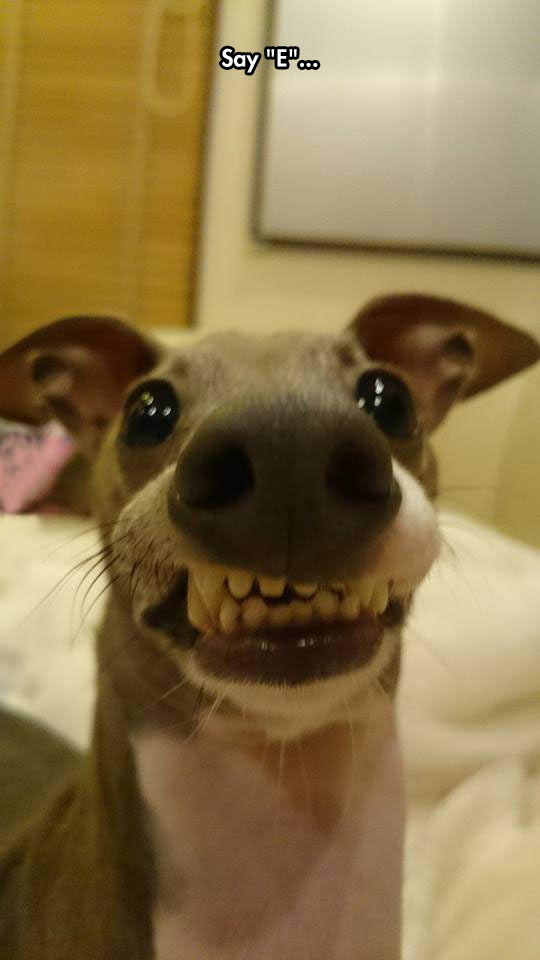funny-dog-face-teeth-weird