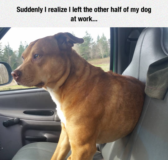 Where Is The Other Part Of Your Dog?