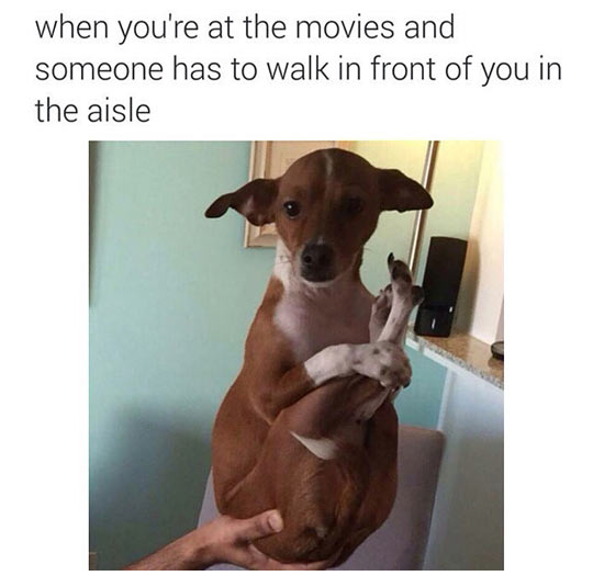 funny-dog-hugging-feet-movie-aisle