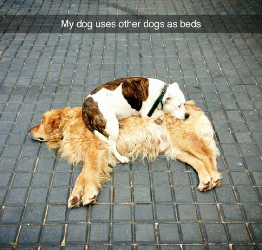 funny-dog-lay-down-over-other