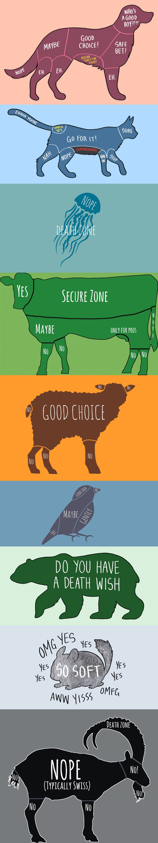 Illustrated Guide For How To Properly Pet Animals