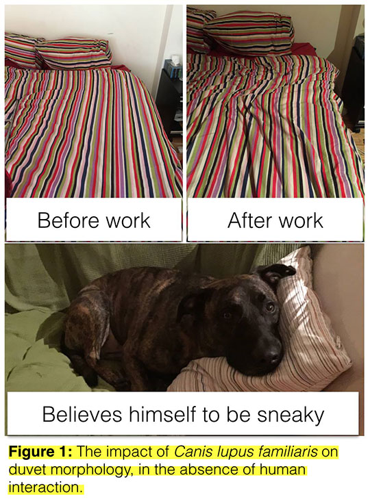 funny-dog-sleeping-bed-cover