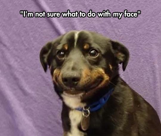funny-dog-smiling-nervous