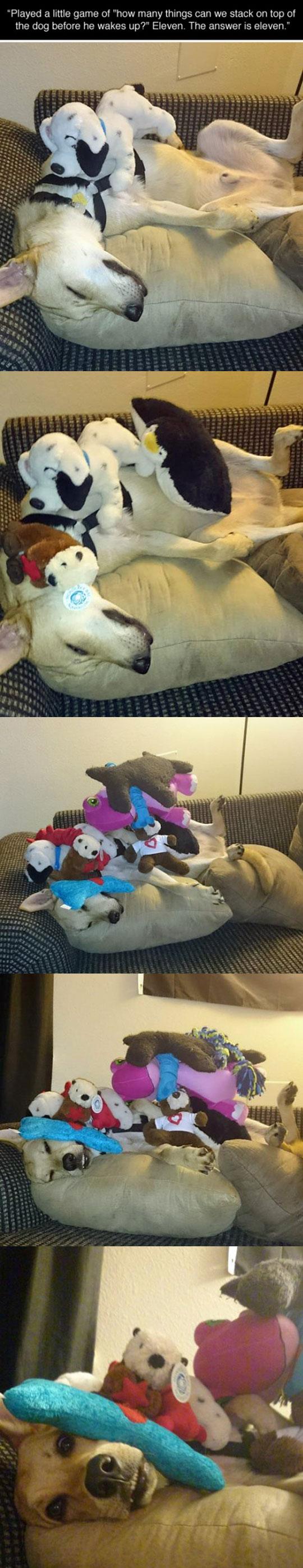 funny-dog-stacked-toys-sleeping