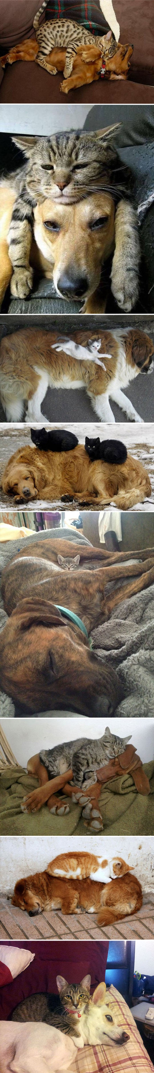 funny-dogs-cat-pillow-sleeping-couch