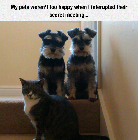 funny-dogs-stairs-cat-secret-meeting