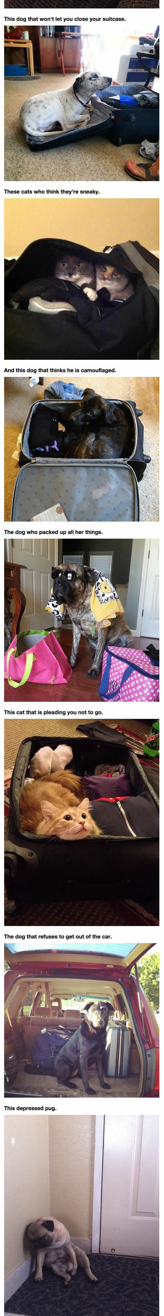 funny-dogs-vacation-travel-clothes-suitcase-cat