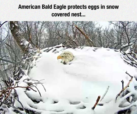 Nice Nest, Elsa