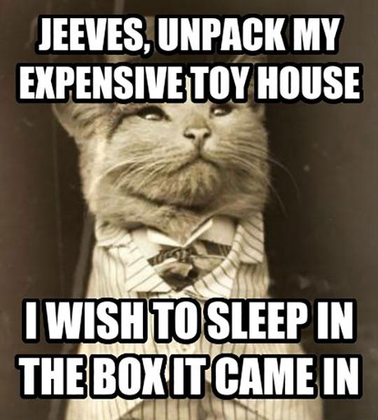 funny-fancy-cat-box