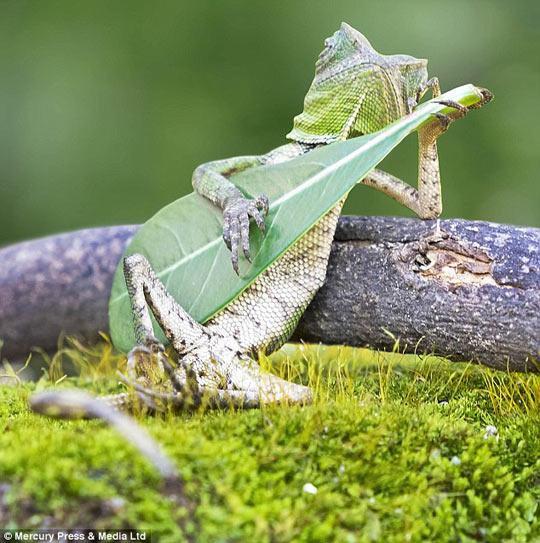 funny-forest-dragon-lizard-leaf