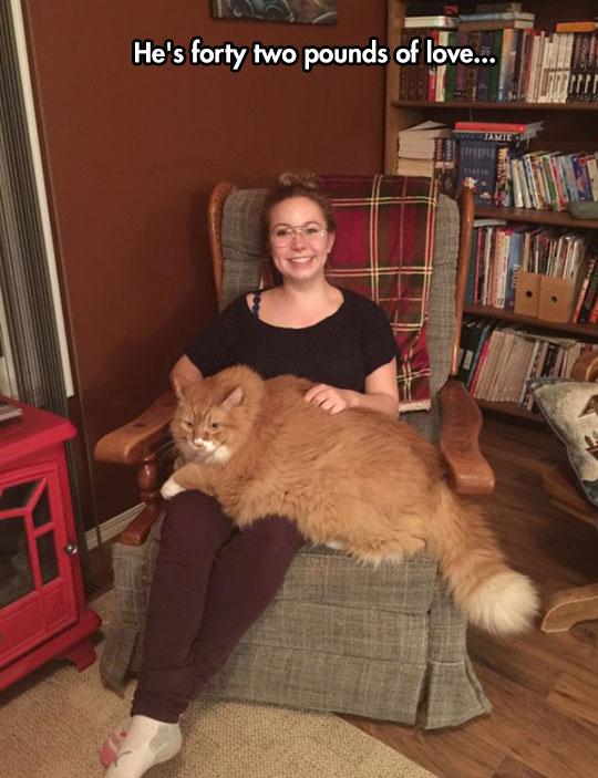 funny-giant-fat-cat-heavy