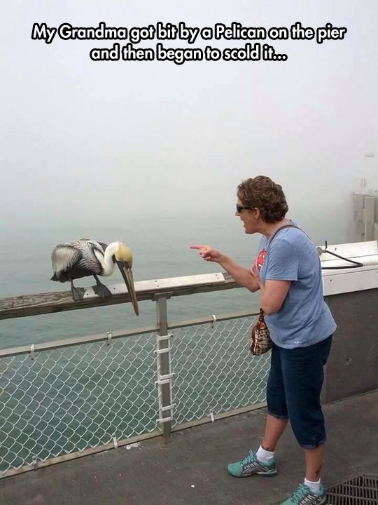 funny-grandmother-pelican-bite-scold