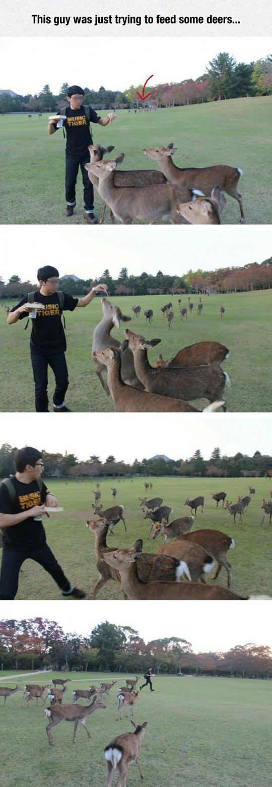 funny-guy-feeding-deer-attack