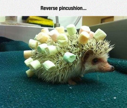 funny-hedgehog-peaks-marshmallows