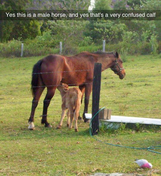 Awkward Moment At The Farm