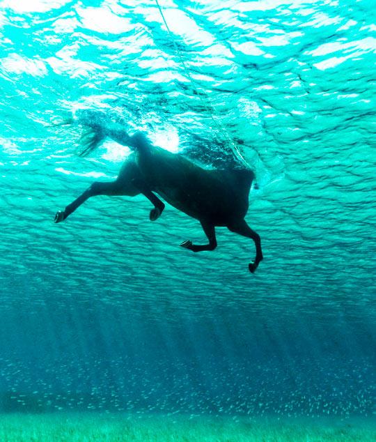 A Beautiful Seahorse