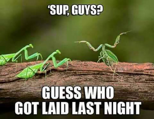 funny-insect-no-head-friends