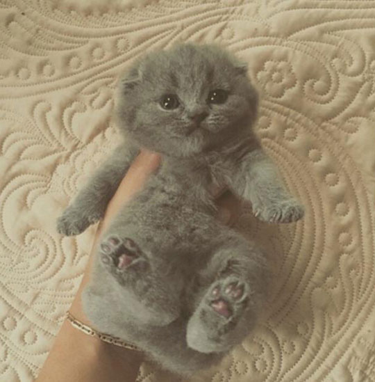 funny-kitty-cute-toy-plush