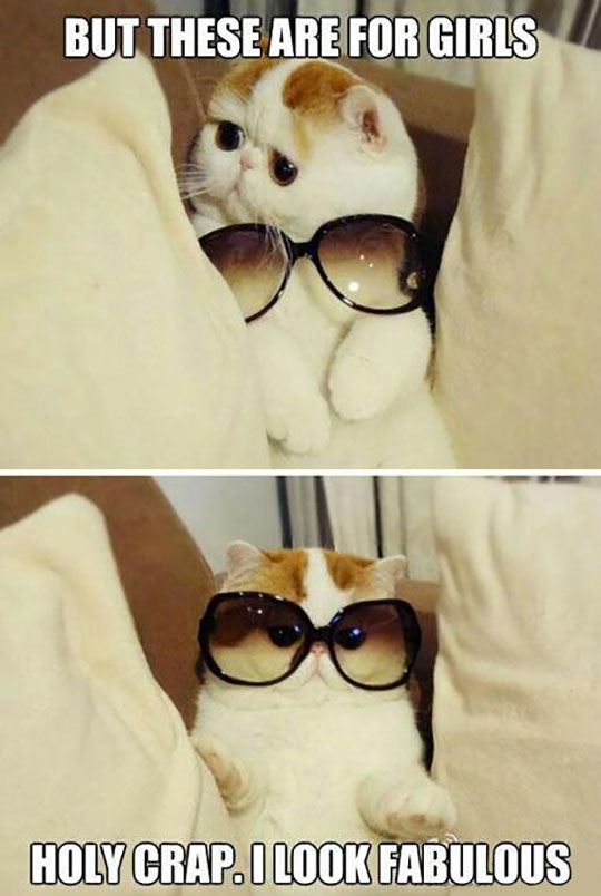 funny-kitty-glasses-cute-fabulous