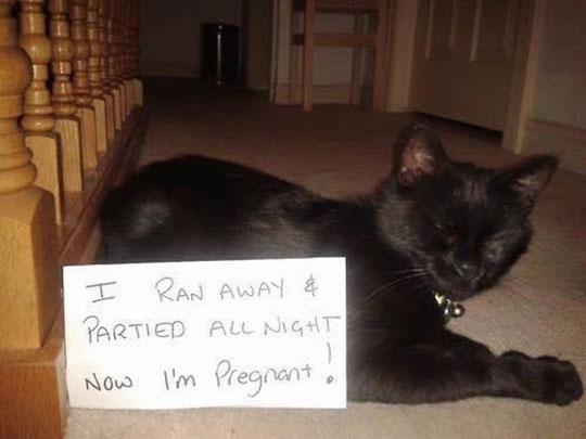 funny-kitty-pregnant-note-sleeping