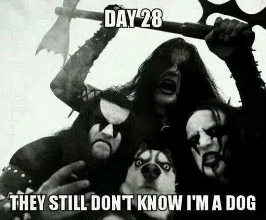 Metal Heads Don