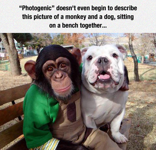 funny-monkey-dog-handsome-park