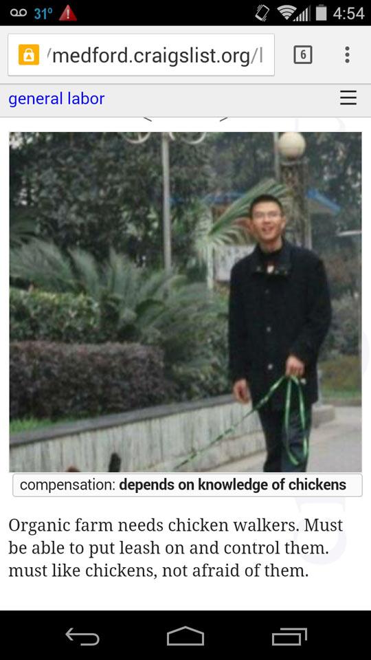 funny-organic-farm-chicken-walkers