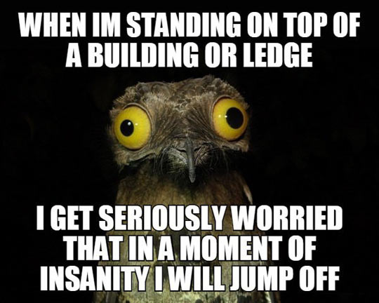 funny-owl-face-top-building-jump-off