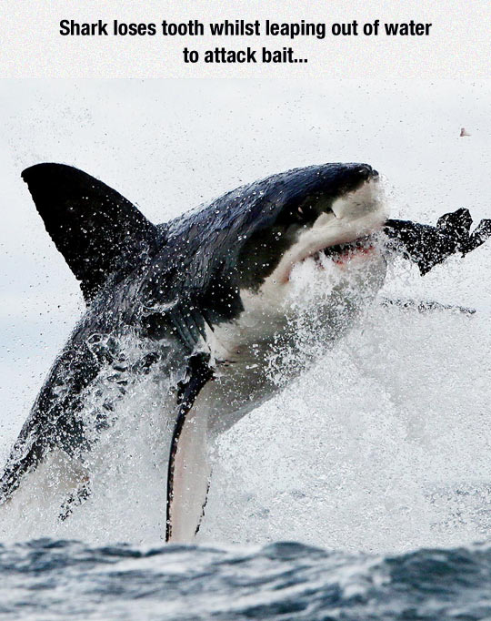 funny-shark-attack-tooth-sea