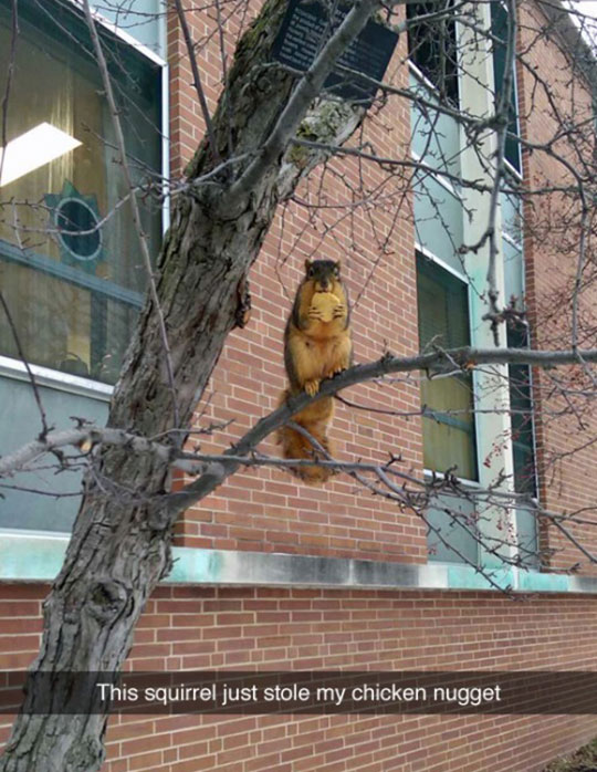 funny-squirrel-tree-stealing-nugget