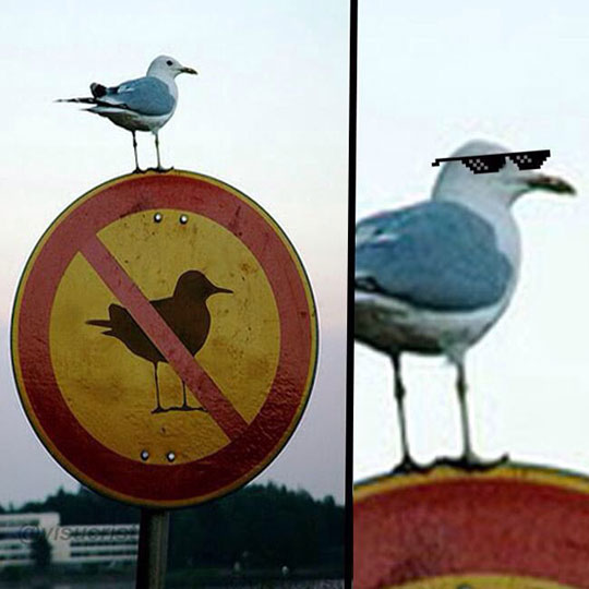 funny-street-sign-bird-cool