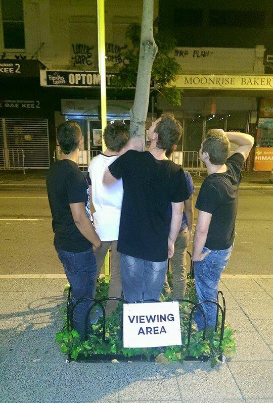 funny-street-viewing-area-friends-tree
