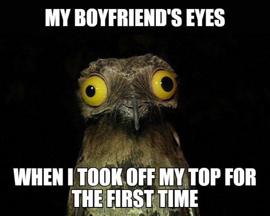 funny-surprised-owl-girl-boyfriend