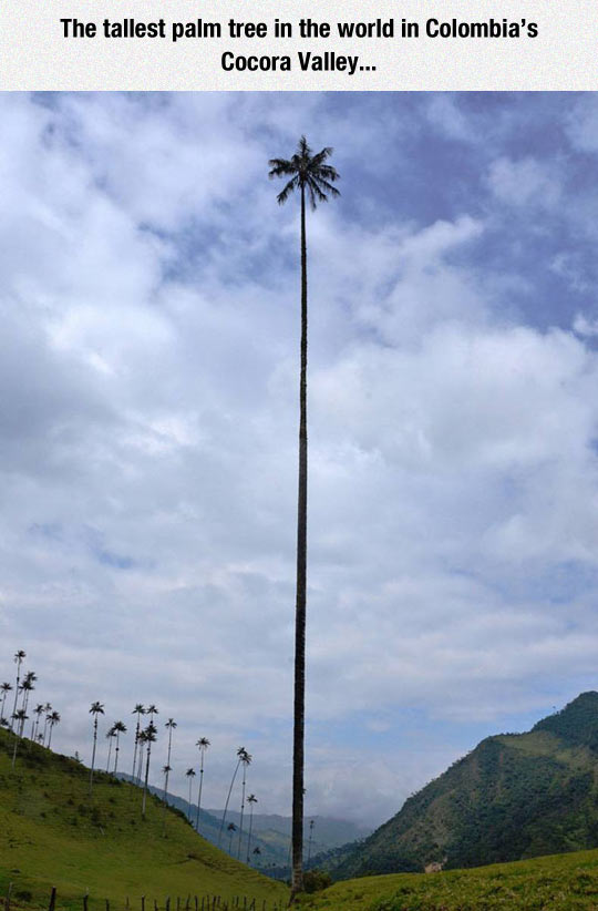 It Seems Really Tall