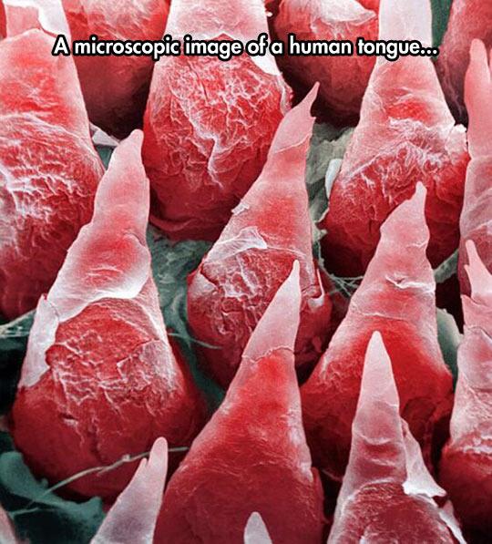 funny-tongue-microscopic-human-cones
