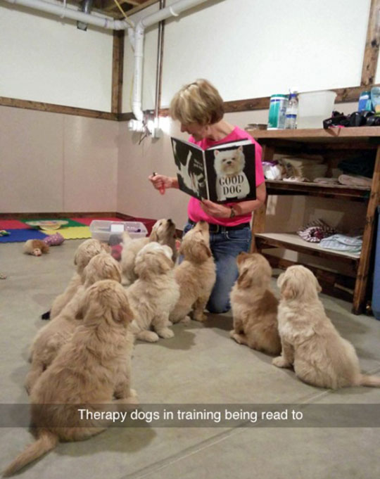 Tiny Therapy Dogs In Training