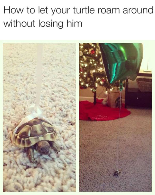 Keep Track Of Your Turtle