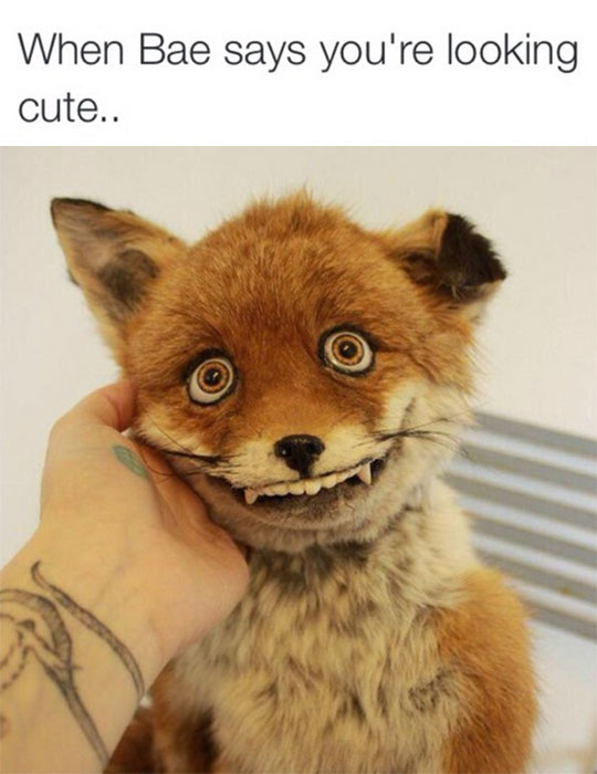 funny-ugly-fox-plush-toy
