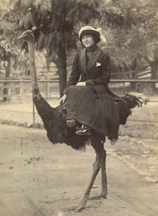 Crazy-Animals-from-Past-17